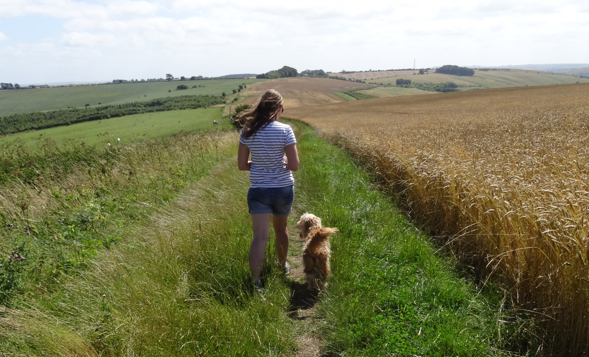 Green open field with lady and dog walking away